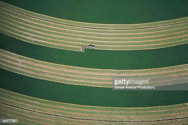 Alfalfa crop, Western Washington, USA
