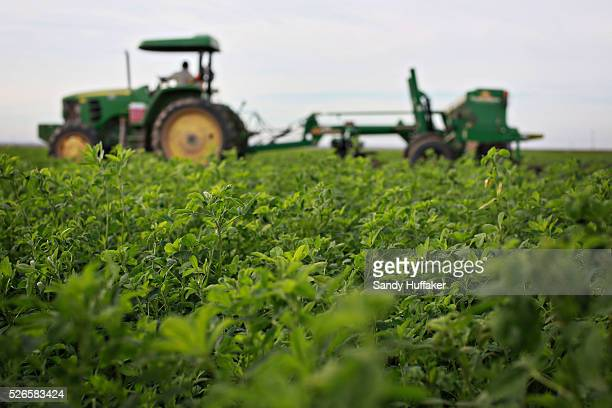 Alfalfa is harvested in field in Brawley California on Thursday December 11 2014A tougher stance by China on imports of genetically modified crops is...