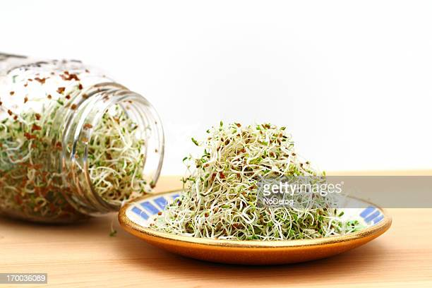 alfalfa sprouts on plate and in jar - seedling stock pictures, royalty-free photos & images