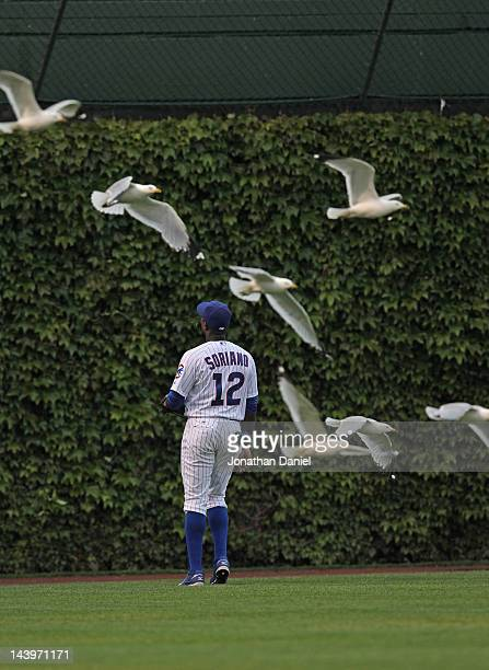 Alfonso Soriano of the Chicago Cubs watches as a home run ball hit by Juan Rivera of the Los Angeles Dodgers sails out of the park while gulls fly...
