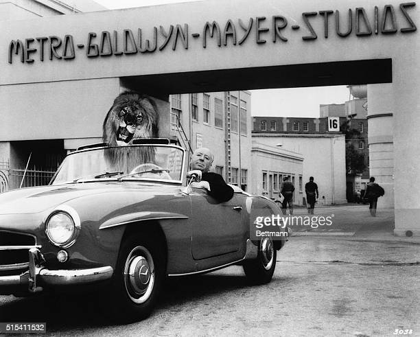 Alfred Hitchcock poses in his MercedesBenz 190 SL convertible with an illusion of the MGM lion in the passenger seat Hitch was on the studio lot to...