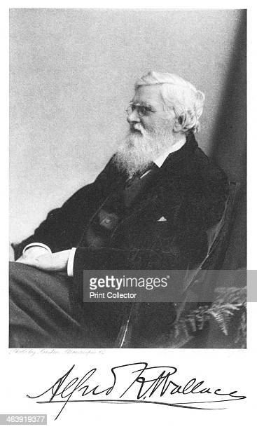 Alfred Russell Wallace Welshborn British naturalist c1900 Wallace independently arrived at a theory of evolution similar to that of Charles Darwin...