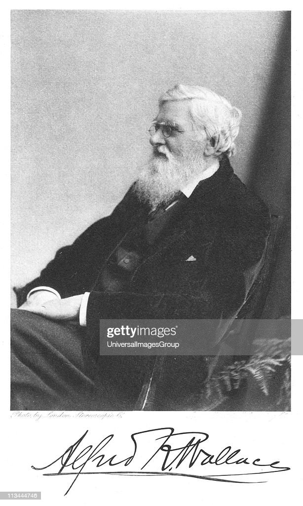 Alfred Russell Wallace (1823-1913) Welsh-born British naturalist. From Edward Clodd Pioneers of Evolution, London,1908... : News Photo