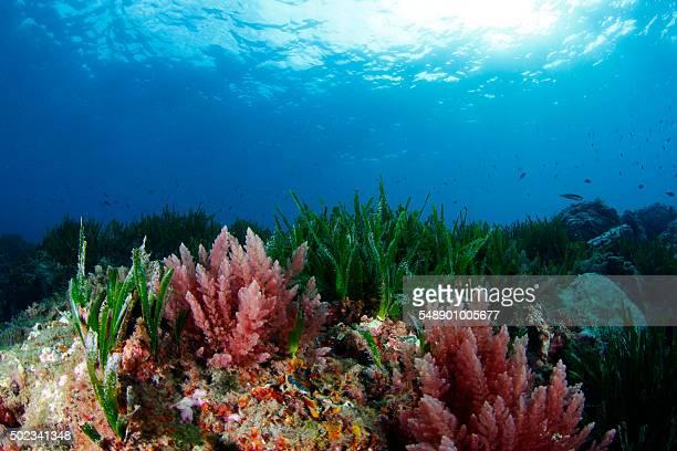 Algae and seagrass