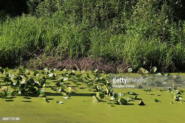 Controlling and Getting Rid of Algae in Lakes & Ponds