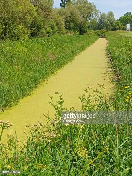 algae bloom in a ditch - newport wales stock pictures, royalty-free photos & images