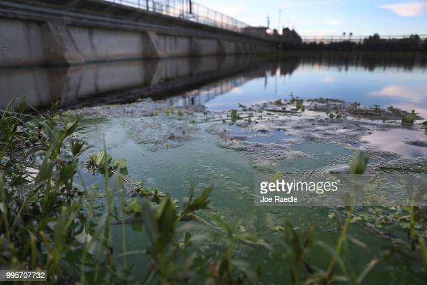 Algae blooms that come mostly from the controlled discharges of water from Lake Okeechobee are seen along the WP Franklin Lock and Dam that helps...