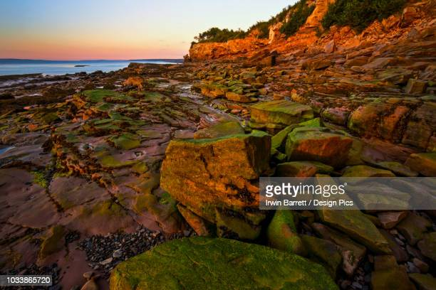 algae coloured rocks and coastline during low tide in the last light of sunset near cranberry head, raven head wilderness along chignecto bay - last stock pictures, royalty-free photos & images