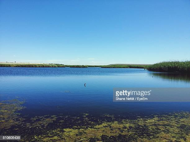 algae floating on water - wilderness stock pictures, royalty-free photos & images