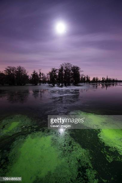 algae in lake martin against sky at night - cypress swamp stock photos and pictures