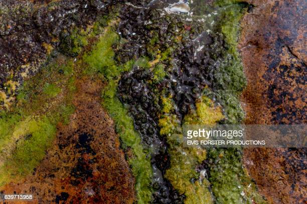 algae on rocks in a bay at south africa - ems forster productions stock pictures, royalty-free photos & images