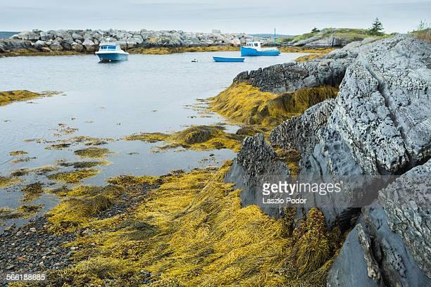 Algae, rocks and boats in Blue Rocks