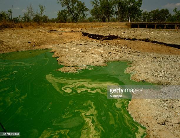 Algal bloom in creek during a period of low flow Runoff from heavily grazed land has introduced excessive nutrients from soil erosion and stock...