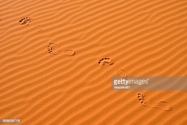 Algeria, footmarks and sand ripples on a desert dune at Sahara