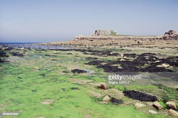 Algues vertes sur la plage de Port-Blanc à marée basse, à Penvénan, dans les Côtes-d'Armor, France.