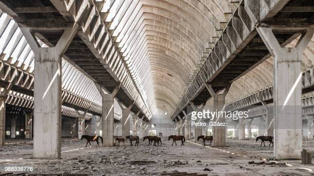 alhaurín de la torre,spain - abandoned stock pictures, royalty-free photos & images