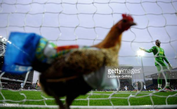 Ali Al Habsi of Wigan Athletic reacts to a chicken in the goal during the Barclays Premier League match between Blackburn Rovers and Wigan Athletic...