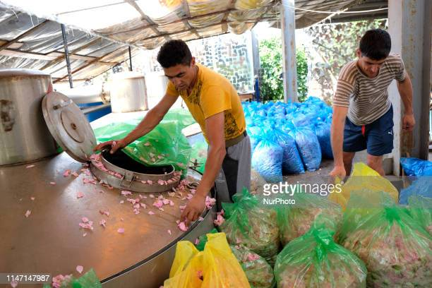 Ali Yankov a worker at the Intermed 1 Ltd empties bags of roses harvested earlier in the day in preparation for the distillation process The company...