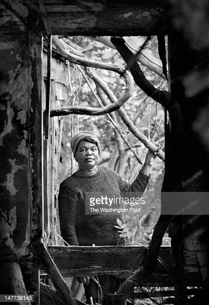 FILE Alice Coles in framed by a window in the abandoned shack that was built by former slave City Saunders around the time of the Emancipation in...