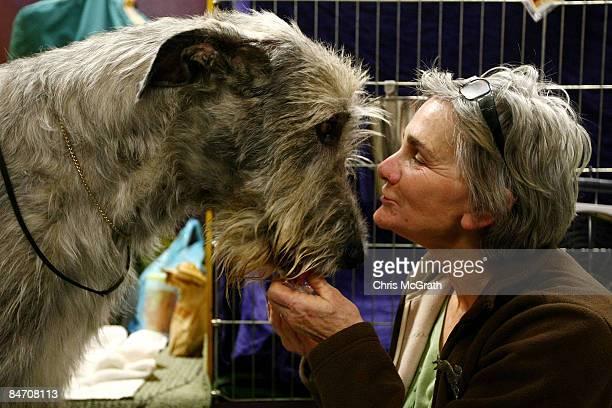 """Alice Kneavel comforts her Irish Wolfhound """" Quest"""" backstage during the 133rd Annual Westminster Kennel Club Dog Show at Madison Square Garden..."""