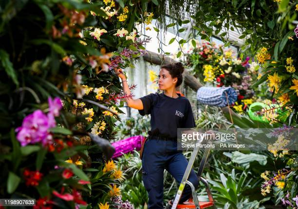 Alice McKeever puts the finishing touches to some of the 5000 colourful orchids and hundreds of other tropical plants in the Indonesiathemed Orchid...
