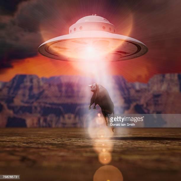 Alien spaceship lifting bull with beam