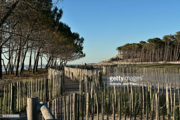 alignment of wooden pickets on a beach near arcachon - aquitaine stock photos and pictures