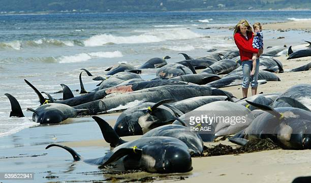 Alison Joyce and son Tyler walk among the carcasses of stranded pilot whales and dolphins on a King Island beach Taken 29 november 2004 THE AGE NEWS...