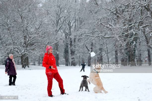 Alison Lawrence throws a snowball for her dog Bluebell to catch on a snow-covered common in Hartley Wintney west of London on January 24, 2021.