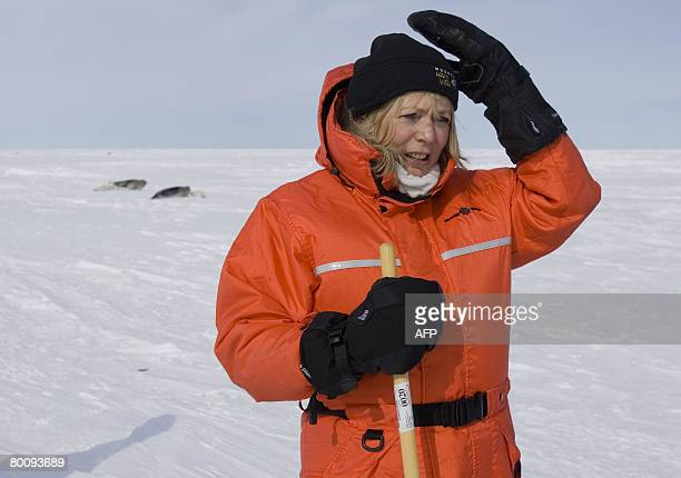 Alison Steadman makes a trip on March 32008 to the ice floes off the coast of the Magdalen Islands Quebec to see the Pup Harp seals Steadman is a...