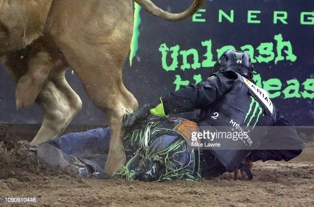 Alisson De Souza is stepped on by Roll of the Dice during the PBR Unleash The Beast bull riding event at Madison Square Garden on January 6 2019 in...
