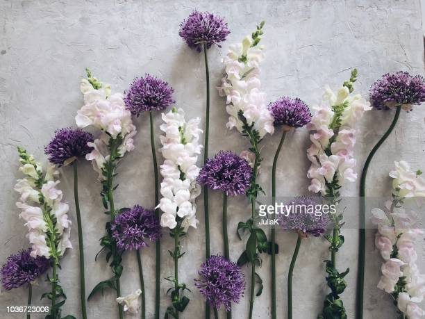 Alium and snapdragon flowers on a grey background