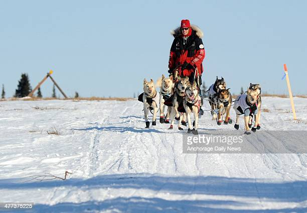 Aliy Zirkle drives her dog team across the portage from Kaltag to Unalakleet during the 2014 Iditarod Trail Sled Dog Race on Saturday March 8 2014