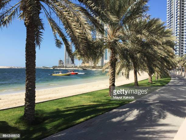 al-khan corniche, sharjah, uae - date palm tree stock pictures, royalty-free photos & images