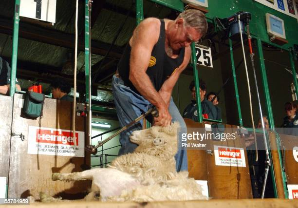All Black legend Colin Meads shears a sheep at the New Zealand Sheep Shearing Championships held in Te Kuiti New Zealand Saturday April 3rd 2004
