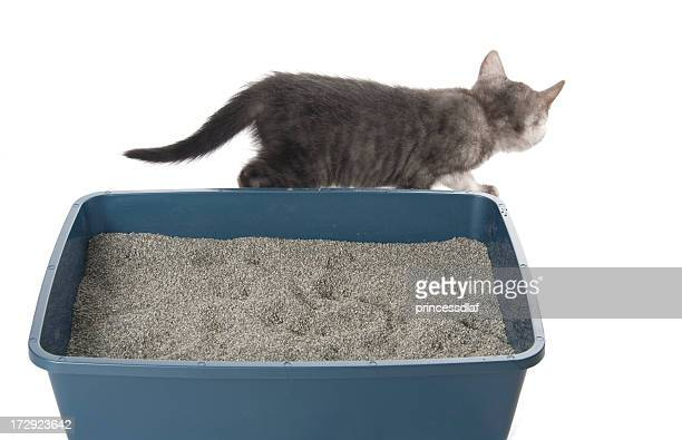 all done - litter box stock photos and pictures