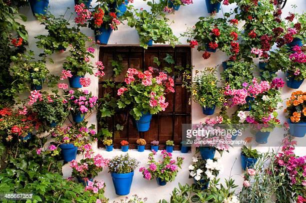 all flowers - スペイン コルドバ市 ストックフォトと画像