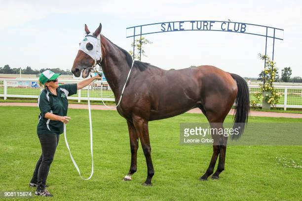 All Hard Wood after winning the KHQ Lawyers Maiden Plate at Sale Racecourse on January 21 2018 in Sale Australia