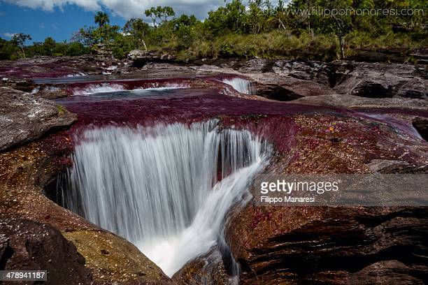 all is love - caño cristales river stock pictures, royalty-free photos & images