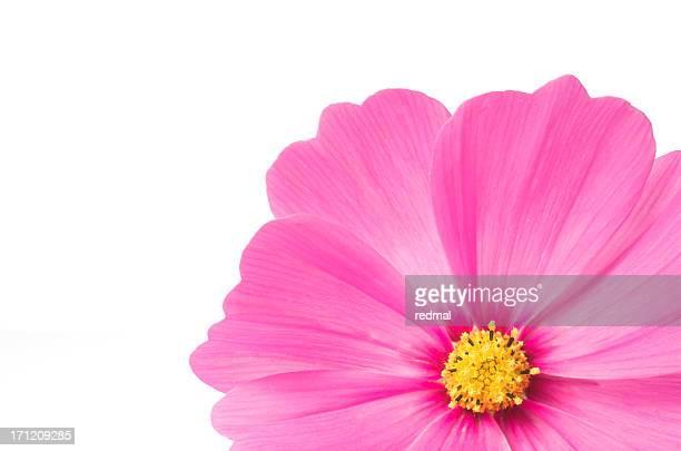 Os cor-de-rosa