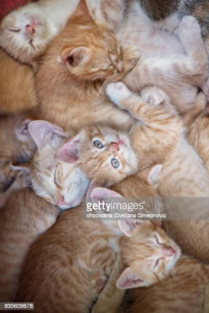 all sleep. i watch. - large group of animals stock pictures, royalty-free photos & images