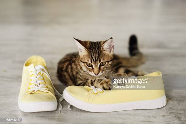kamberk, czech republic - november 18, 2014: all star converse sneakers and british cat - new stock pictures, royalty-free photos & images