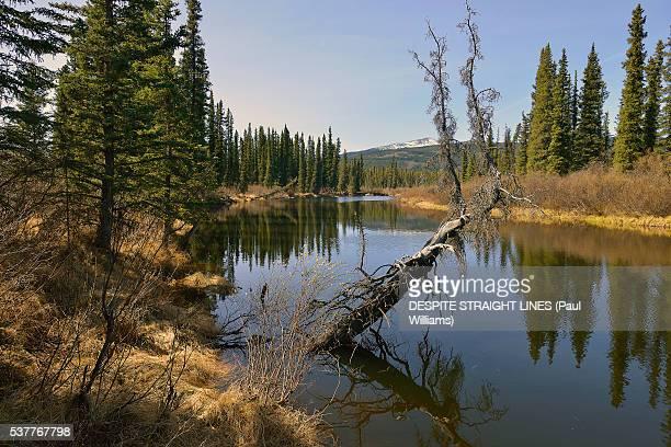 all that remain are memories - río swift fotografías e imágenes de stock