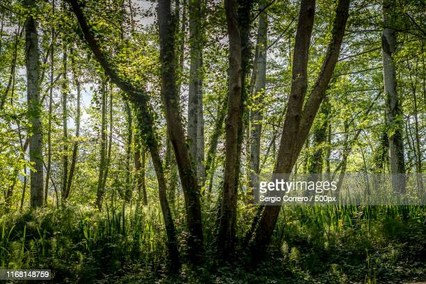 all together - banyoles stock pictures, royalty-free photos & images