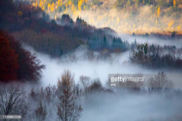 allemons forest in morning fog - grenoble stock pictures, royalty-free photos & images