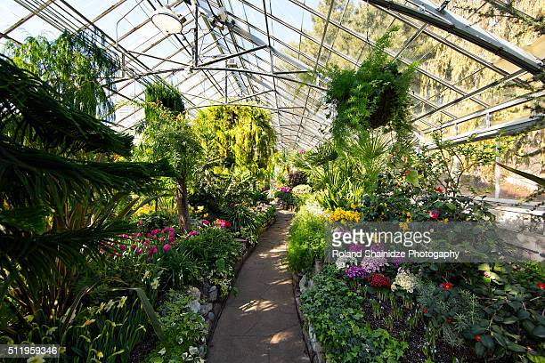allen gardens - botanical garden stock pictures, royalty-free photos & images