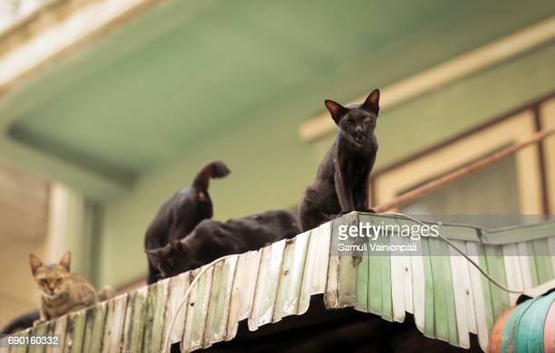 Alley cats on rooftop, Bangkok, Thailand