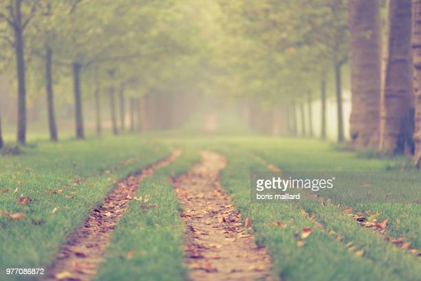 alley covered with autumn leaves, versailles, ile-de-france, france - yvelines stock pictures, royalty-free photos & images