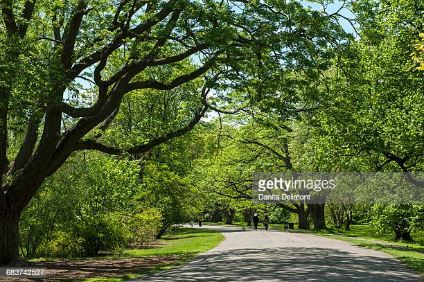 Alley in green sunny park, Meadow Road, Arnold Arboretum, Boston, Massachusetts, New England, USA