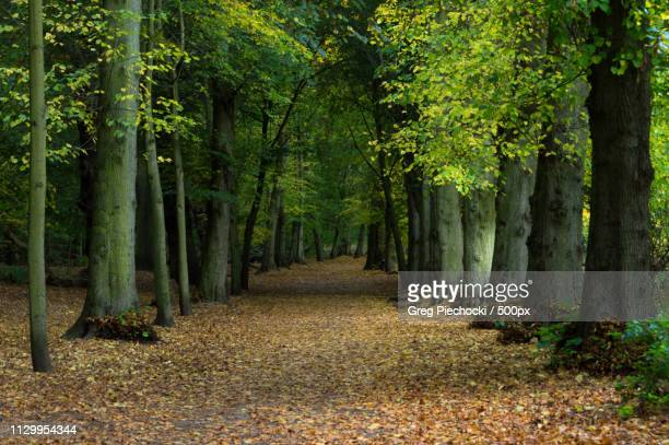 alley - forest floor stock photos and pictures
